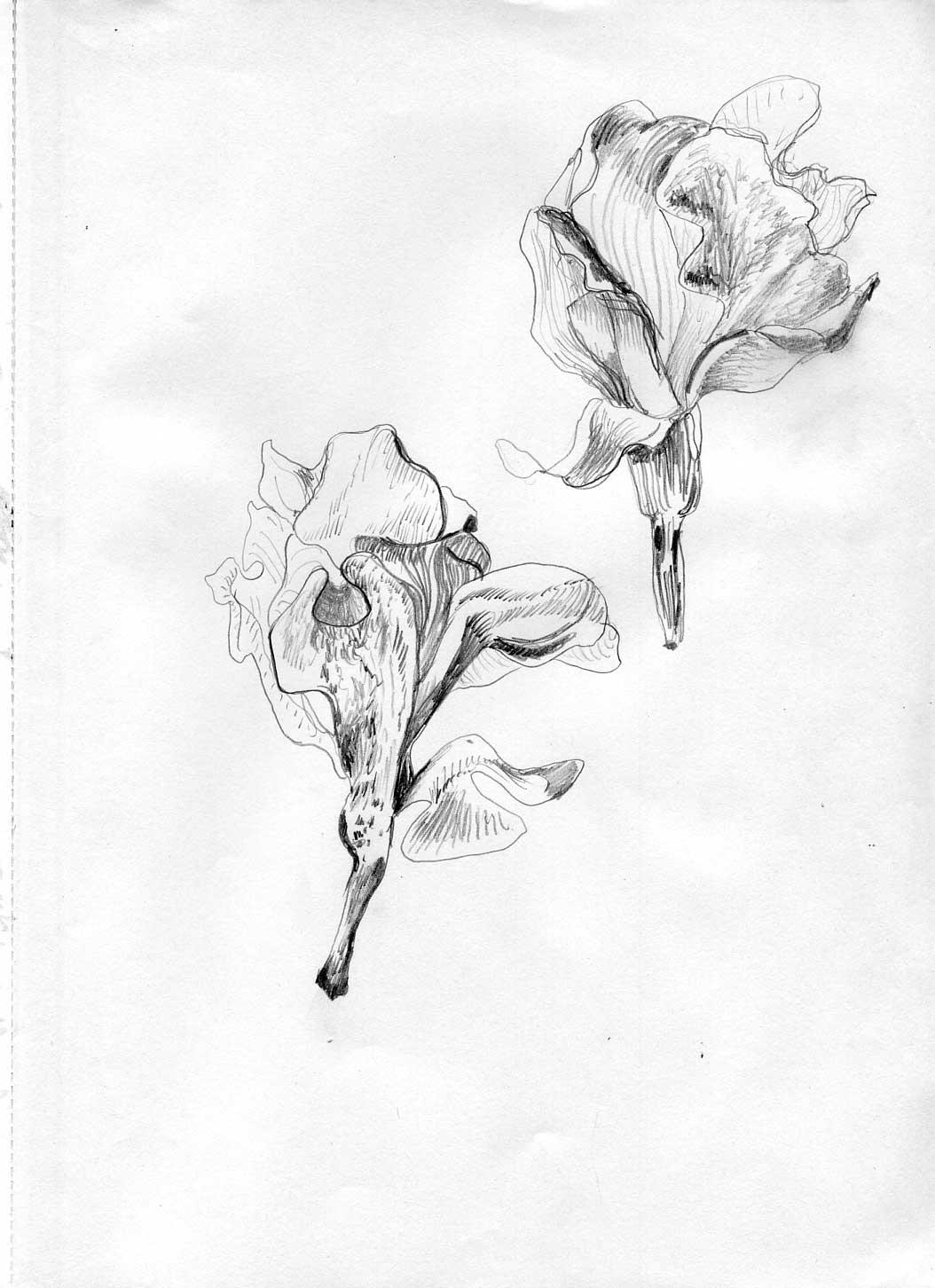 roses030